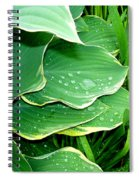 Hosta Leaves And Waterdrops Spiral Notebook