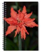 Hostal Candelaria  Spiral Notebook
