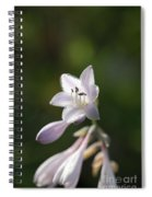Hostas Spiral Notebook