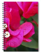 Hot Pink Bougainvillea Spiral Notebook