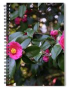 Hot Pink Camellias Glowing In The Shade Spiral Notebook