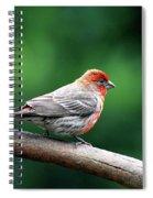 House Finch . 40d7227 Spiral Notebook