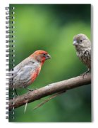 House Finch Courtship Spiral Notebook