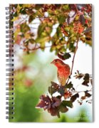 House Finch Hanging Around Spiral Notebook