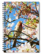 House Finch In The Cherry Blossoms Spiral Notebook