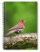 House Finch Perched Spiral Notebook