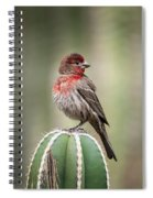 House Finch Perched On Cactus  Spiral Notebook