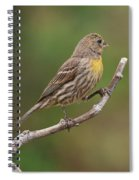 House Finch With Yellow Breast 1  Spiral Notebook