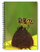 Hoverfly On Brown Eyed Susan Spiral Notebook