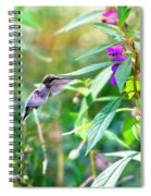 Hovering Hummingbird Spiral Notebook