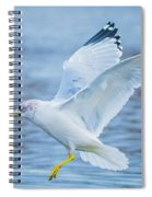 Hovering Seagull Spiral Notebook