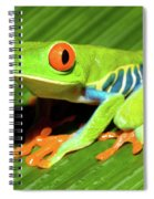How About Some Real Color Spiral Notebook