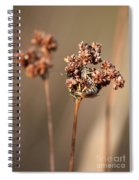 How Bees Keep Warm  Spiral Notebook