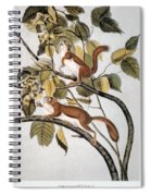 Hudsons Bay Squirrel Spiral Notebook