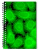Human Glioma Cell Line Spiral Notebook