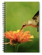 Hummer And Zinnia Spiral Notebook