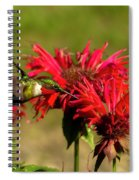 Hummer In The Bee Balm Spiral Notebook