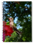 Hummers And Colored Daisies Spiral Notebook