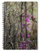Humming Bird In Nature Spiral Notebook