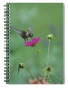 Humming Bird On A Cosmo Spiral Notebook