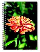 Humming Bird's Favourite Spiral Notebook