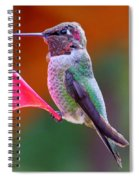 Hummingbird - 28 Spiral Notebook