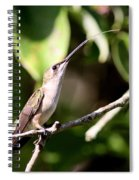 Hummingbird - Ruby-throated Hummingbird - Testing The Air Spiral Notebook