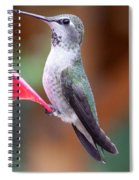 Hummingbird 1 Spiral Notebook