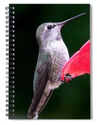 Hummingbird 23 Spiral Notebook