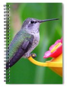 Hummingbird 32 Spiral Notebook