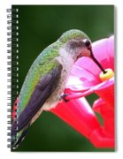 Hummingbird 33 Spiral Notebook