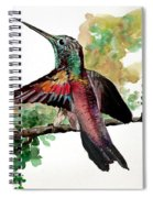 Hummingbird 5 Spiral Notebook