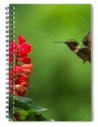 Hummingbird And Scarlet Sage Spiral Notebook