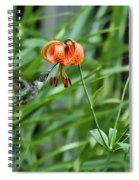 Hummingbird And Tiger Lilly Spiral Notebook