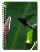 Hummingbird At Banana Flower Spiral Notebook