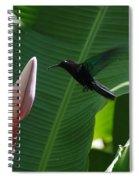 Hummingbird At Banana Flower Spiral Notebook