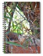 Hummingbird Babies Spiral Notebook