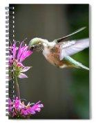 Hummingbird Beauty Spiral Notebook