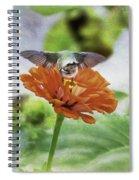 Hummingbird Bow Spiral Notebook
