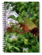Hummingbird Clear-wing Moth At Monarda Spiral Notebook