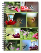 Hummingbird Collage 2 Spiral Notebook