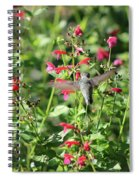 Hummingbird Drinking From Red Trumpet Vine Spiral Notebook
