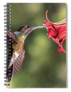 Hummingbird Enjoying Beautiful Flower Spiral Notebook