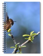 Hummingbird Feeling Frisky 1 Spiral Notebook