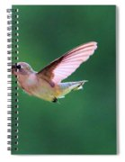 Hummingbird Flickering Its Tongue Spiral Notebook