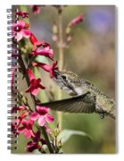 Hummingbird Haven  Spiral Notebook