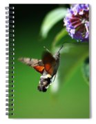 Hummingbird Hawk Moth - Five Spiral Notebook