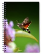 Hummingbird Hawk Moth - Four Spiral Notebook