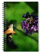 Hummingbird Hawk Moth 2 Spiral Notebook