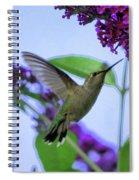 Hummingbird In Butterfly Bush Spiral Notebook